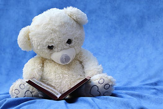 still-life-teddy-white-read